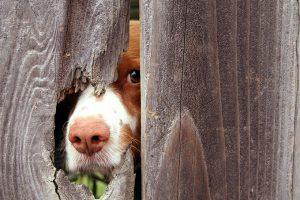 dog-home-alone-through-fence