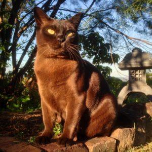 Cat Dental Vet Procedure Sunshine Coast