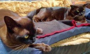Cat Dental Vet Procedure Sunshine Coast Friendly Cats
