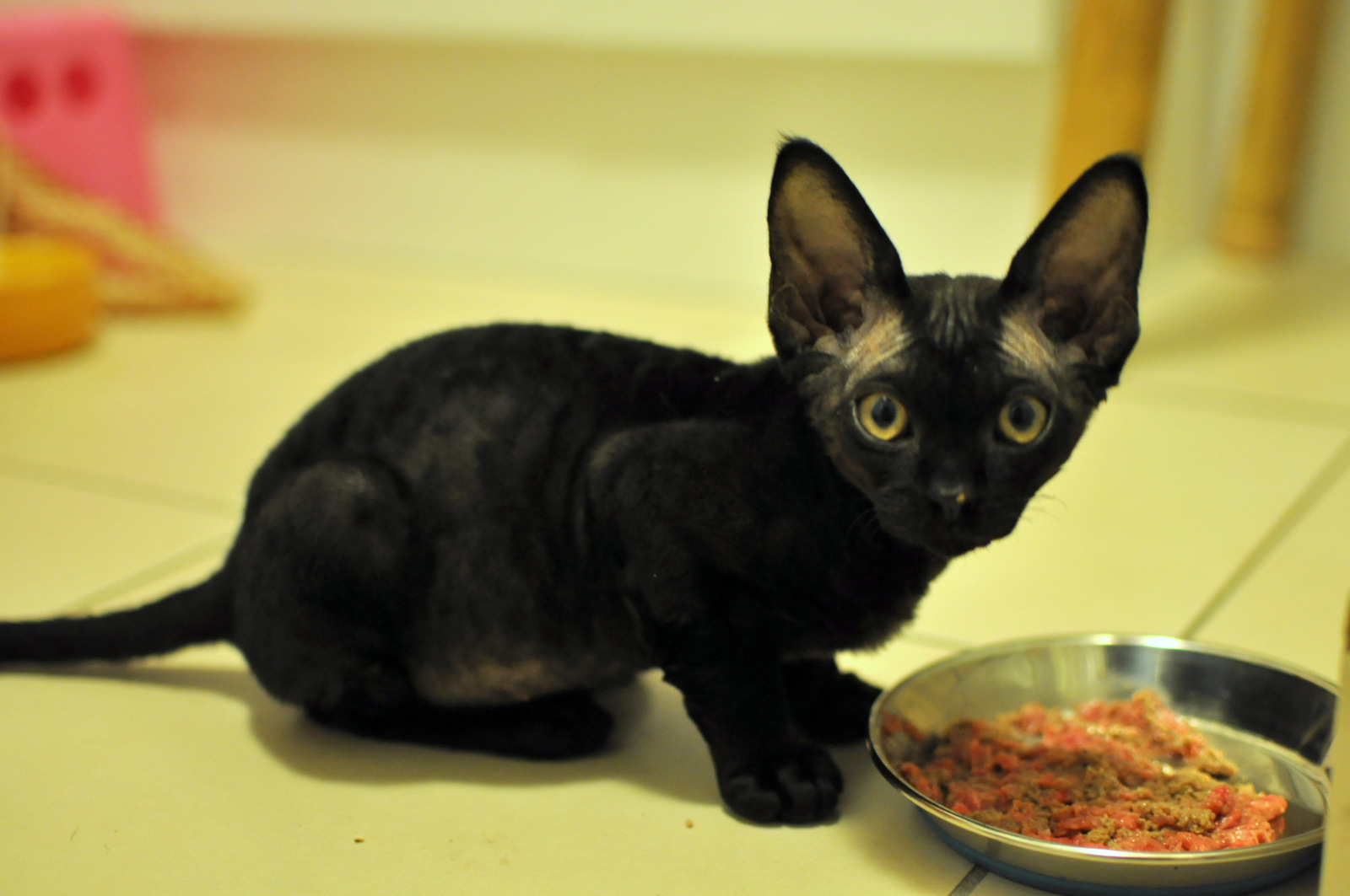 Kitten diet - how it should be