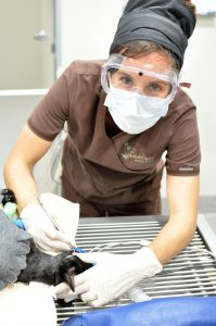 Sunshine Coast Vet Pet Dental Teeth Tooth