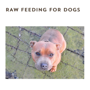 Raw Feeding For Dogs eBook - The Natural Vets - Cover - Square