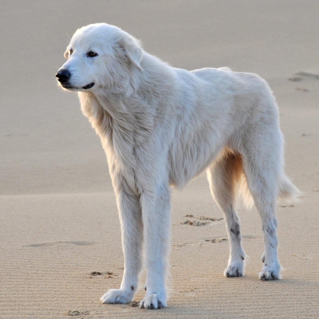Dog Behaviour training Sunshine Coast Brisbane