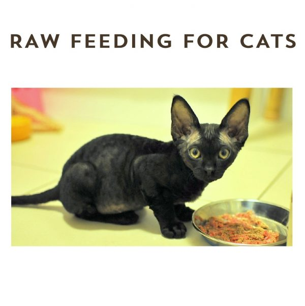 eBook Raw Feeding for Cats - The Natural Vets - Cover Square