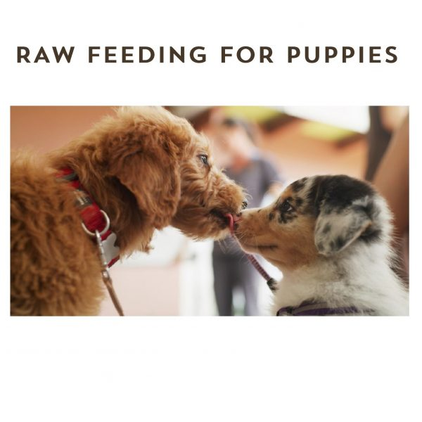 Raw Feeding for Puppies eBook - The Natural Vets - Cover Square